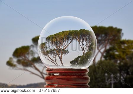 Italian Stone Pine In Rome  Through A Glass Transparent Ball
