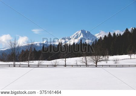 Sunlit Snow Mountain Panorama With Evergreen Forest And Leafless Trees Along Fence In Winter Landsca