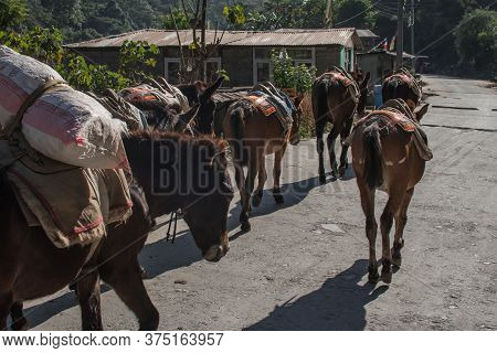 A Few Mules Carrying Walking On A Road At Annapurna Circuit, Nepal