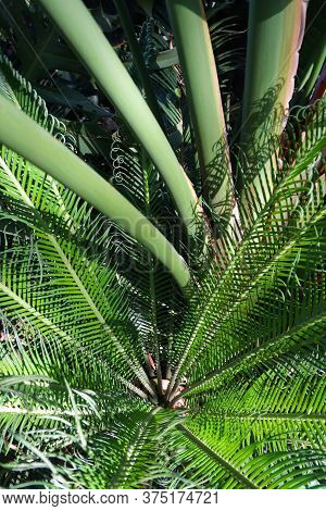 Cycad And Palms Tropical Greenery Abstract, Pretoria, South Africa