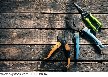 Garden Pruner On The Garden Table Background With Copy Space.