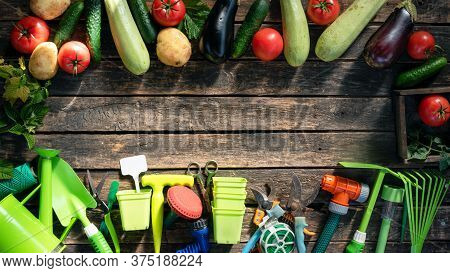 Garden Tools And Vegetables On The Garden Table Flat Lay Background With Copy Space. Gardening. Agri