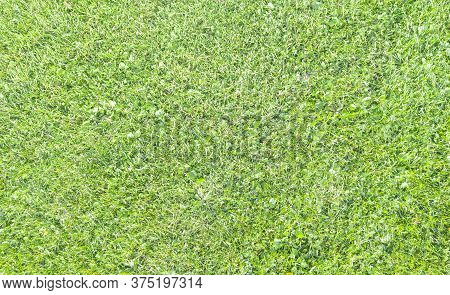 Top View Of Green Fresh Summer Lawn. Aerial View From The Drone. Green Grass Pattern And Texture. Gr