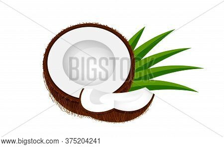 Coconut Half Slice On Leaf Green, Coconut Brown Fruit Half Cut Isolated On White, Illustration Cocon