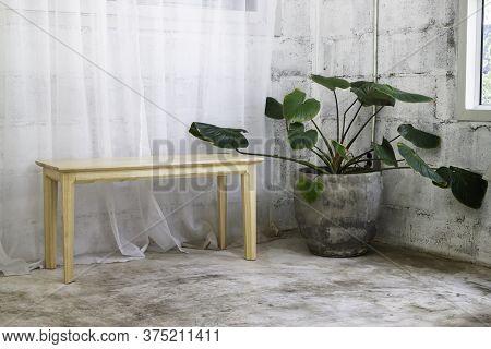 Interior Green Leaves Plant Pot, Stock Photo