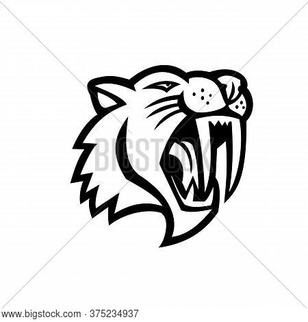 Black And White Mascot Illustration Of Head Of An Angry Saber-toothed Cat Or Smilodon, Viewed From S