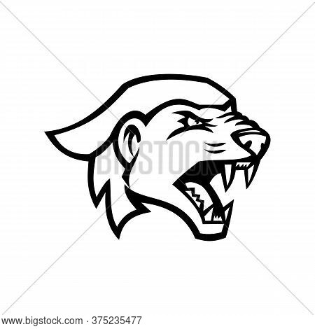 Black And White Illustration Of Head Of Angry And Aggressive Honey Badger Mellivora Capensis, Also K