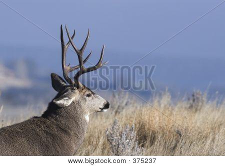 City Buck