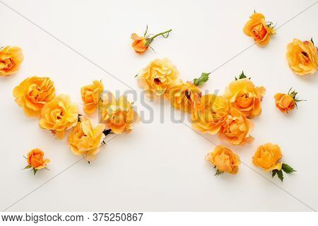 Various yellow roses scattered on a white background, overhead view. Flat lay.
