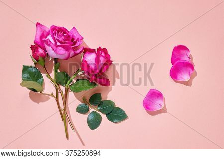 Pink roses with green leaves on pastel background, flat lay.