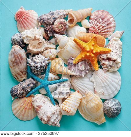 Selection of sea shells and star fish on teal background.