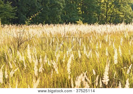 Grass field in countryside