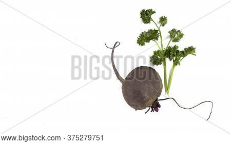 Beet. Organic Beet Vegetable. Fresh Red Beets On A White Isolated Background. Parsley. Isolate Copys