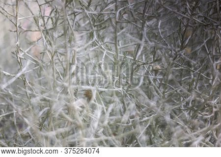 Abstract Floral Horizontal Background. Blurred Twigs And Sprigs. Grey Natural Background. Mysterious