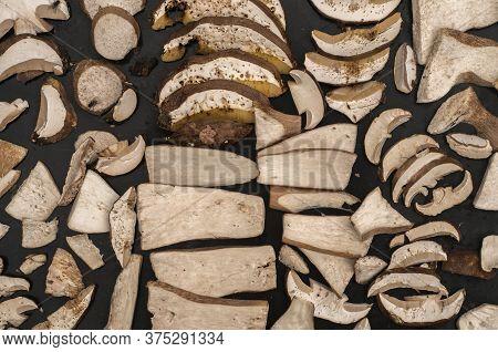Sliced Fresh Boletus Edulis Mushrooms Prepared For Drying