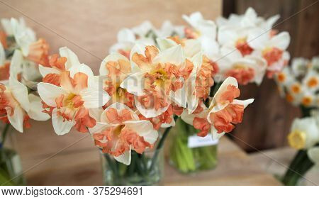 Nice White Daffodil In Bright Blurry Background In Early Spring, Maltese Daffodil, Narcis, Blossom D