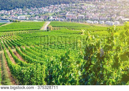 Vineyards Green Fields Landscape With Grapevine Rows On Hills In Rhine Gorge River Rhine Valley, Rhe