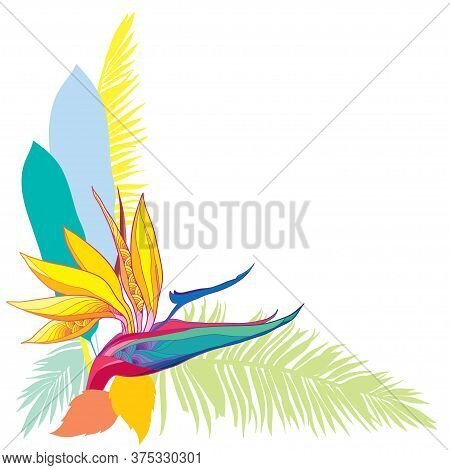 Vector Corner Bouquet Of Outline Tropical Strelitzia Reginae Or Bird Of Paradise Flower And Palm Lea