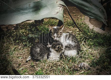 Three Homeless Kittens Bask In Each Other. Stray Little Kittens Are Cold Outside