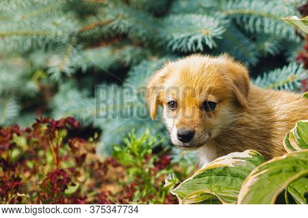 Portrait Of An Abandoned Homeless Dog Puppy With A Sad Look. Sad Puppy. Selective Focus