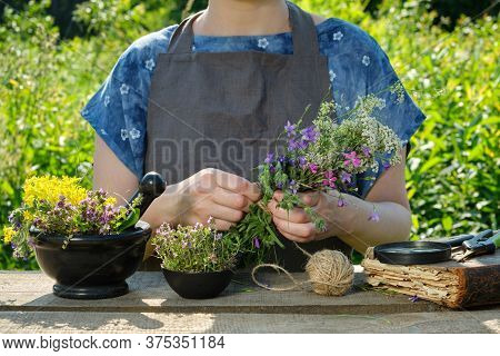 Woman Harvesting Medicinal Plants. Herbalist Holding In Her Hands Bunch Of Medicinal Herbs. In Front