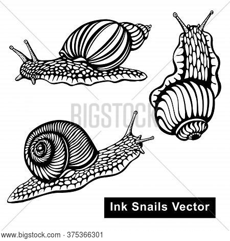 Snails Vector Black And White Illustration - Hand Drawn With Ink, Decorative Artistic Stylization, B