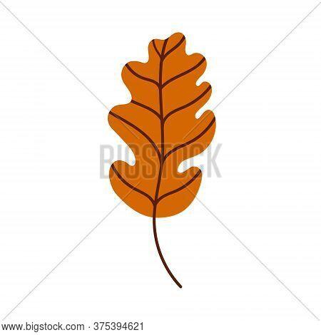 Oak Leaf Isolated On A White Background. Fallen Brown Oak Leaf. Flat Vector Illustration