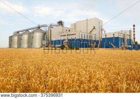 Grain Elevator In Front Of Wheat Field. Flour Or Oil Mill Plant. Silos Near Farmland. Agriculture Th