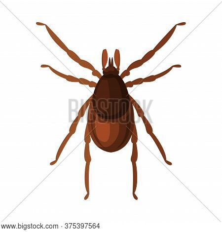 Mite Tick Insect, Pest Control And Extermination Concept Vector Illustration On White Background