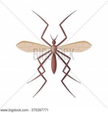 Mosquito Insect, Pest Control And Extermination Concept Vector Illustration On White Background