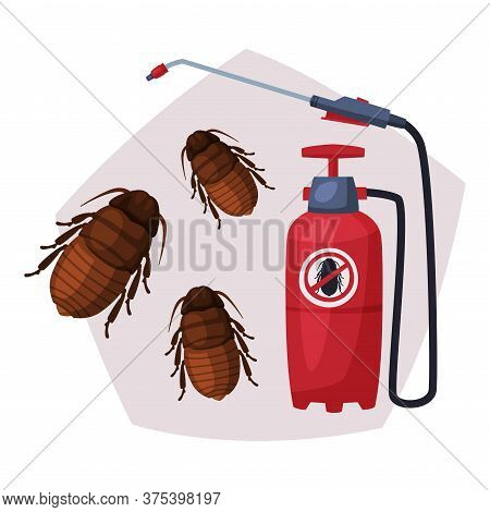 Sprayer Of Black Cockroach Insecticide, Pest Control Service, Detecting And Exterminating Insects Ve