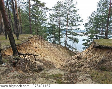 Sand Erosion In A Quarry. Tree Roots Exposed Due To Soil Erosion. Planted Trees To Prevent Soil Eros