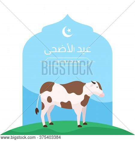 Happy Eid Al Adha Islamic Holiday The Sacrifice Of Livestock Animal Poster Design. Cow Vector Illust