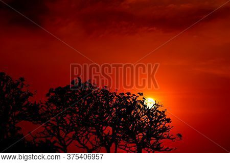 Flame Red Orange Yellow Sky In Sunset Back Silhouette Tree