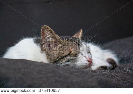 Beautiful Kitten Sleeping On A Soft Duvet