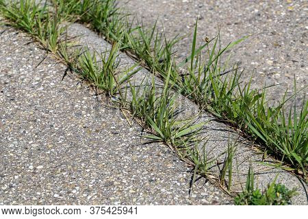 Green Grass Sprouts At The Junctions Of An Asphalt Road