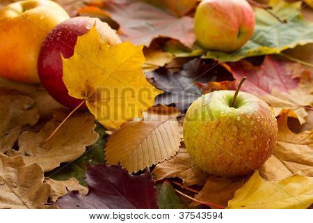 Apples and maple leaves