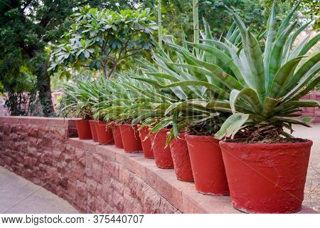 Flower Pots Of Different Colour And Different Prospective, Isolated On White Background, Copy Space.