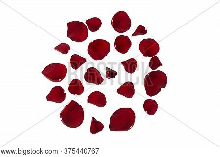Fresh Burgundy Rose Petals Are Located On A White Background In The Form Of A Beautiful Round Patter