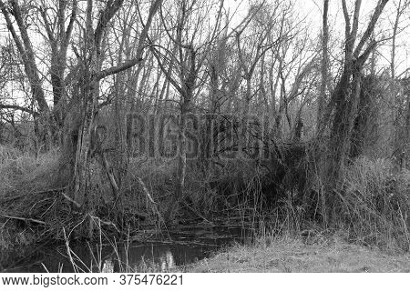 A Spooky Forest Trees With Marsh In Grayscale Black And White