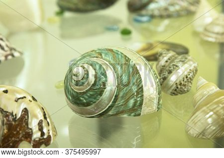 Set Of Sea Shells On Glass Surface Close Up