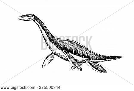 Prehistoric Reptile Of The Jurassic Period, Giant Plesiosaur With Fins, Sea Raptor, Vector Illustrat