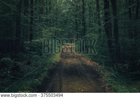 Dark Moody Mysterious Spooky Forest With A Road Crossing It In The Middle