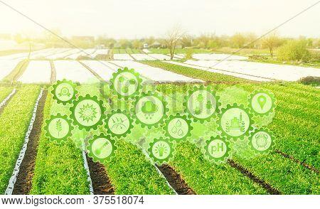 Futuristic Innovative Technology Pictogram On Green Farm Potato Fields On An Sunny Morning Day. Agri