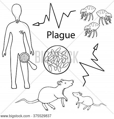 Bubonic Plague. Warning. The Scheme Of Infection With The Plague Bacterium: Rat - Flea - Man. Vector