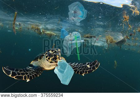 Environmental issue of plastic pollution problem. Sea Turtles can eat plastic bags mistaking them for jellyfish