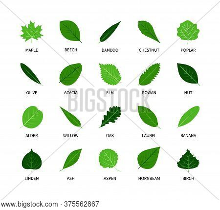 Useful Leaves Colored Natural Icons Silhouette Vegan Analysis Vector Set. Design Line Elements Leaf