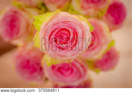 Close Up Of A Bouquet Of Esperance Roses Variety, Studio Shot, Pink Flowers