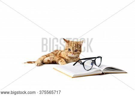 A Small Red-haired Kitten Next To A Hardcover Book, Reading Glasses, Isolated On A White Background.