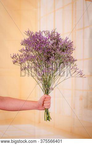 Women Hand Holding A Bouquet Of Limonium Maine Blue Foliage Variety, Studio Shot, Purple Flowers